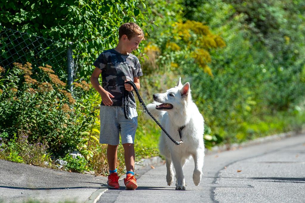 Jetzt aktuell! Dogs & Kids FUN